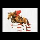 borduurpakket paardensport