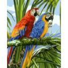 stramien papegaaien in regenwoud